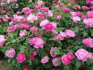 flower141126