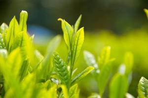 leaf141108
