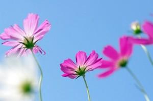 flower141212