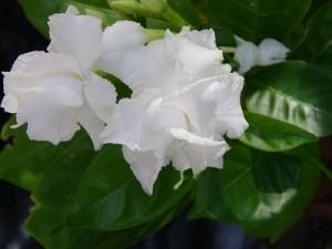 flower141210