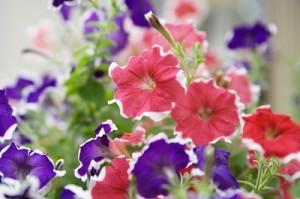 flower141223
