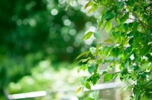 leaf141218