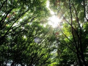 tree141221