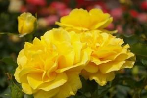 flower150110