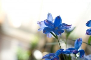 flower150118