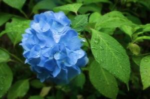 flower150123