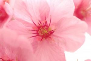 flower150129