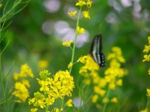 flower150312