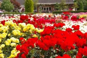 flower150304