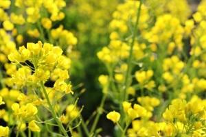 flower0408