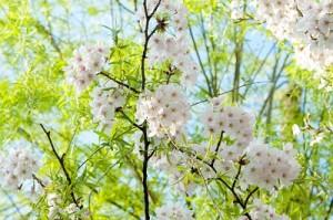 flower0411