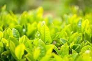 leaf0416