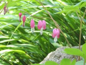 flower0517