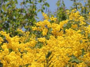 flower0523