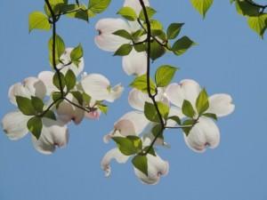 flower0525