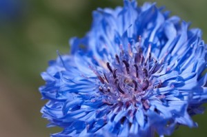 flower0509