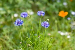 flower0511