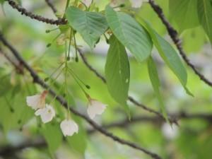 flower0520