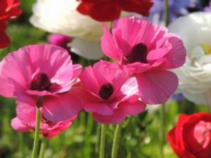 flower0527