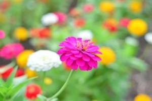 flower0615