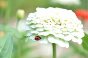 flower0612