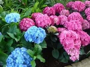 flower0601