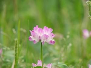 flower0607
