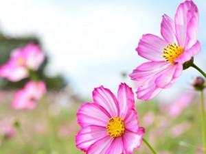 flower0611
