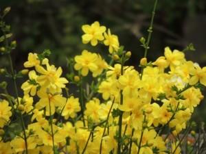 flower0623