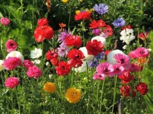 flower0630
