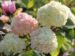 flower0602