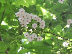 flower0603