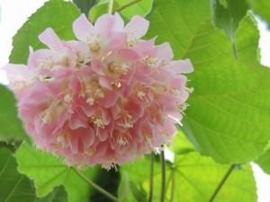 flower0606