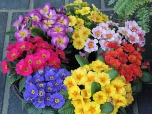 flower0609-2