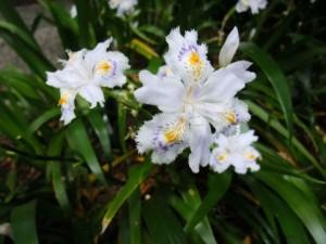 flower0613