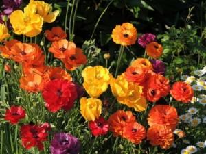 flower0614