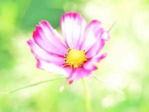 flower0615-2