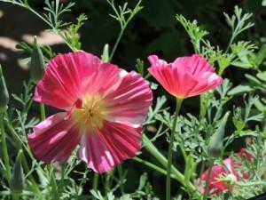 flower0618