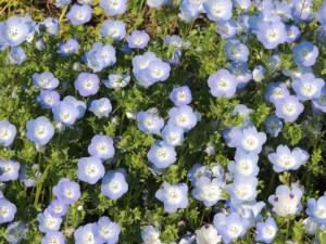 flower0624