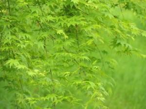 leaf0626
