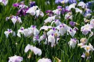 flower0714