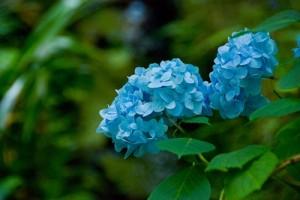 flower0702