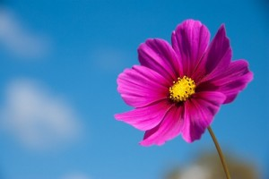 flower0717