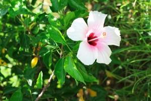 flower0724