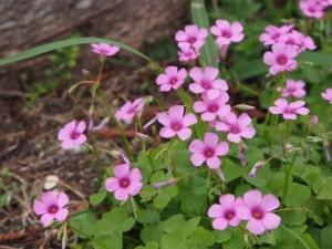 flower0704-1