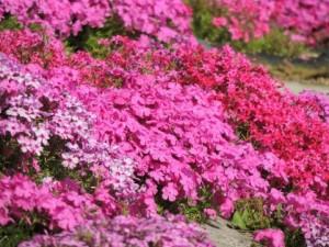 flower0704