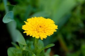 flower0705