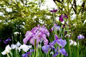 flower0707
