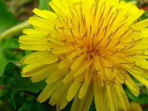 flower0709