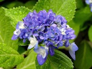 flower0713